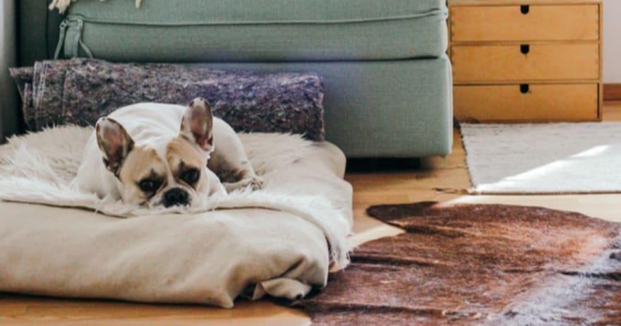 עבודה מהבית - כלב ישן על כרית בחדר יפה ונעים